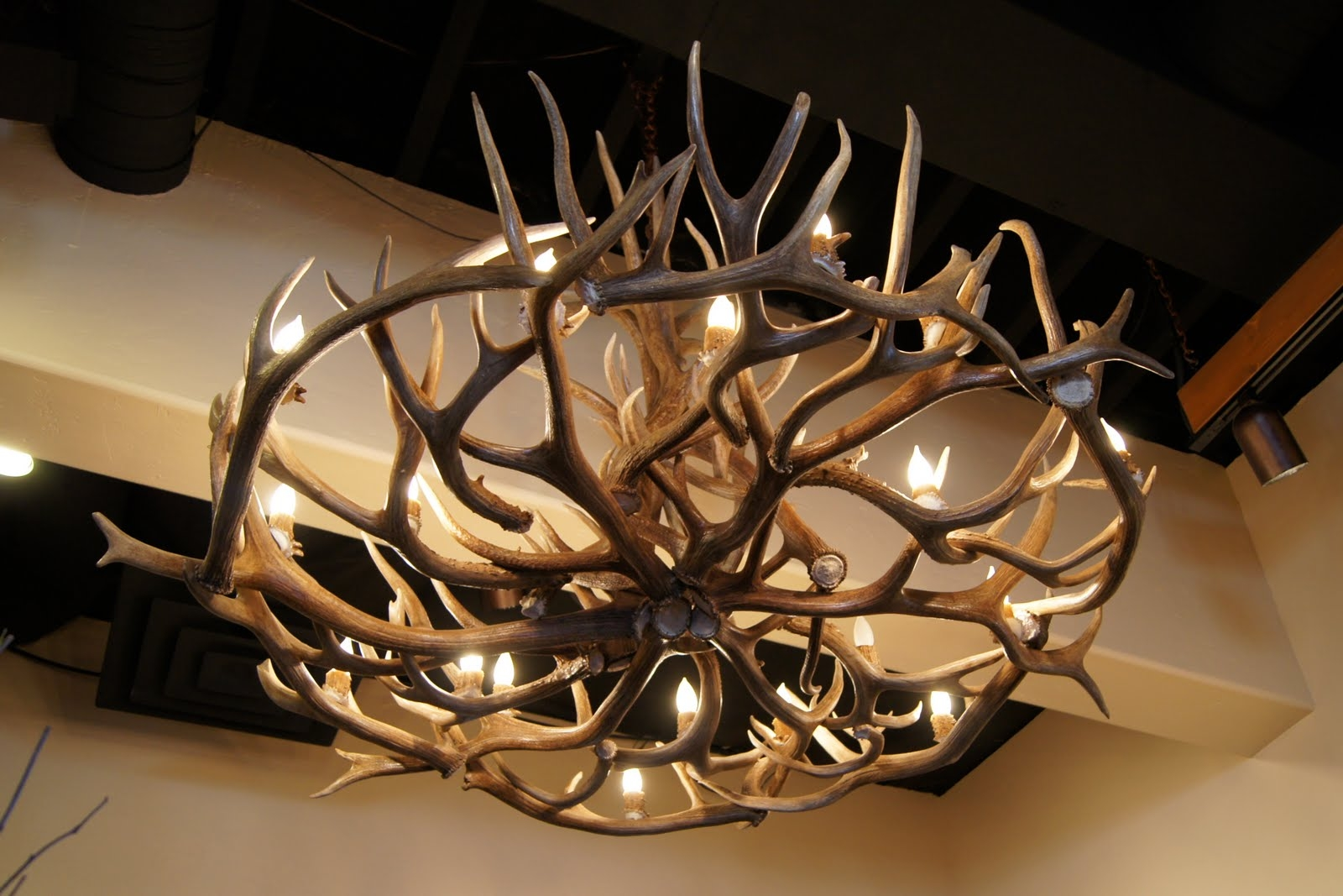 Inspiration about Unique Antler Chandelier Ideas With Regard To Stag Horn Chandelier (#2 of 12)