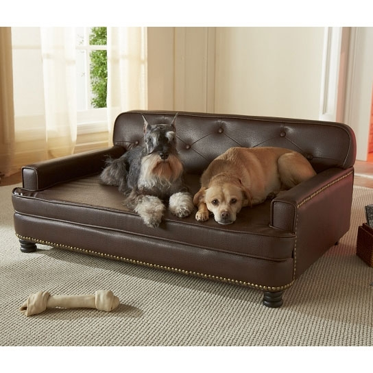 Encantado Espresso Dog Sofa Bed Luxury Dog Beds At Glamourmutt With Regard To Luxury Sofa Beds (#4 of 15)