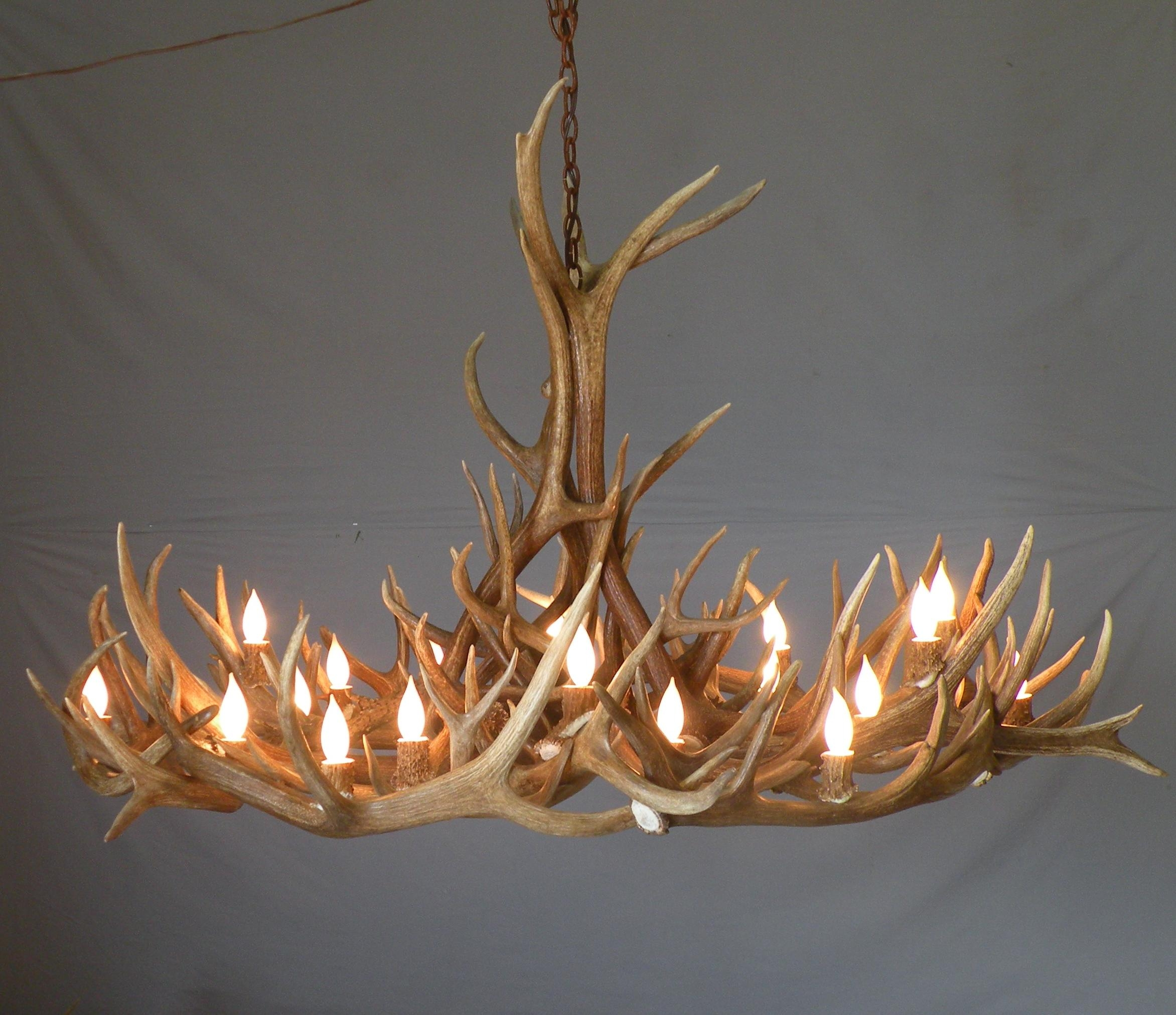 Lamp Deer Horn Chandelier With Authentic Look For Your Lighting Within Large Antler Chandelier (#5 of 12)