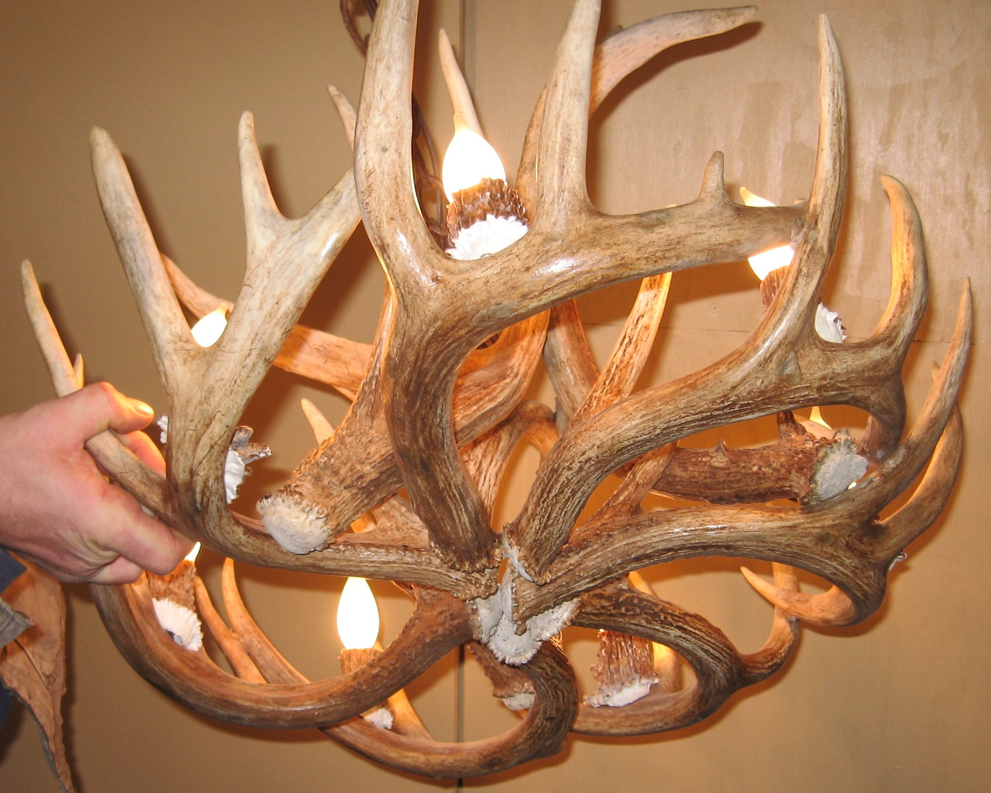 Round Whitetail Deer Antler Chandelier Intended For Antler Chandeliers And Lighting (#11 of 12)