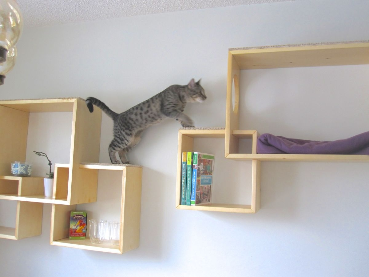 Trend Wall Mounted Cat Shelves 98 For Your Wall Mounted Glass In Wall Mounted Glass Display Shelves (#8 of 15)