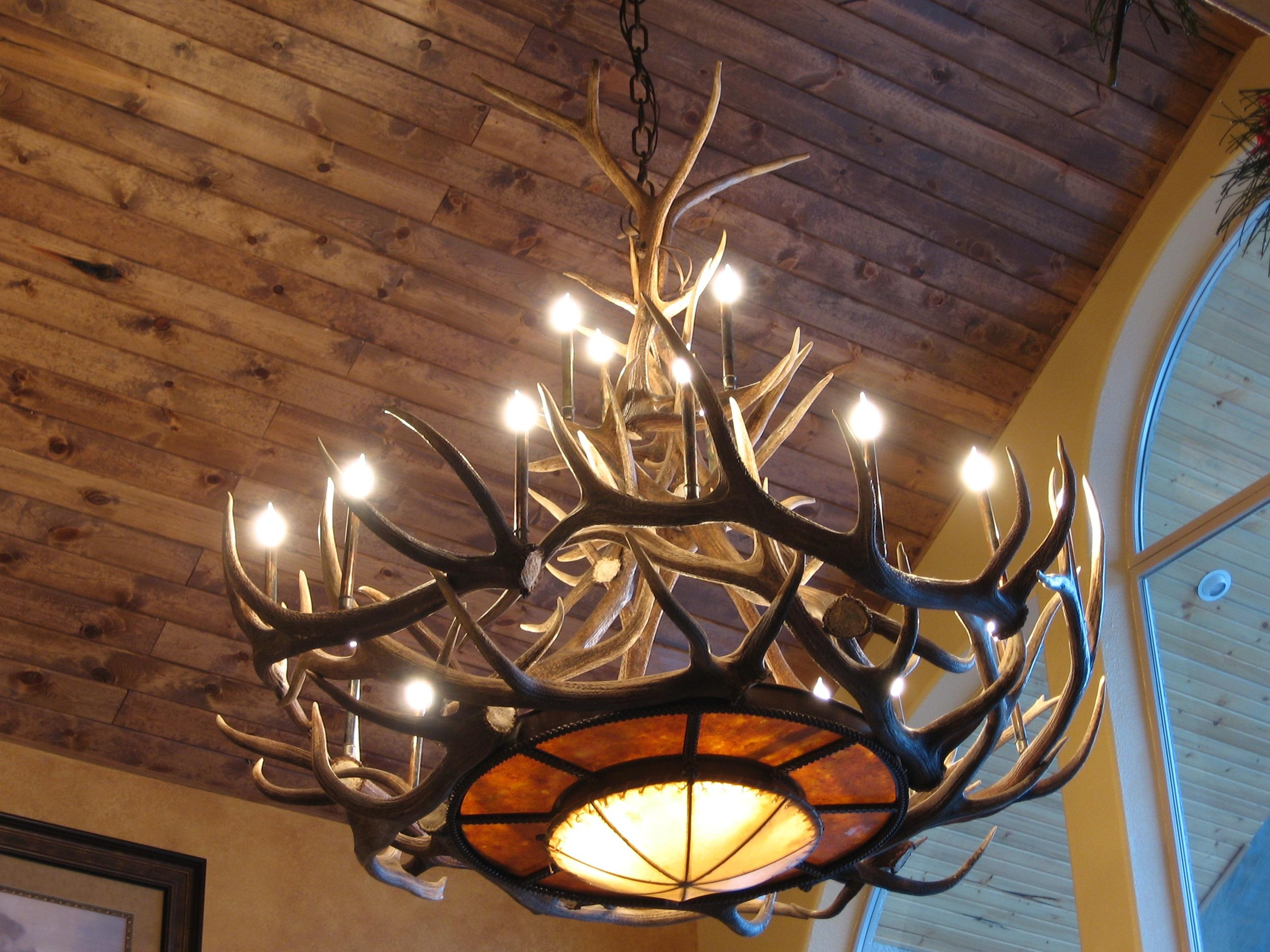 Tweeds Rawhide Mica Elk Antler Chandelier With Large Antler Chandelier (#10 of 12)