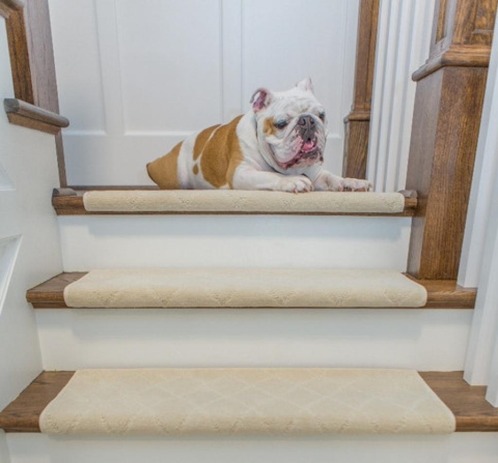 Carlisle Adhesive Bullnose Carpet Stair Tread For The Home Stair With  Carpet Stair Treads For Dogs