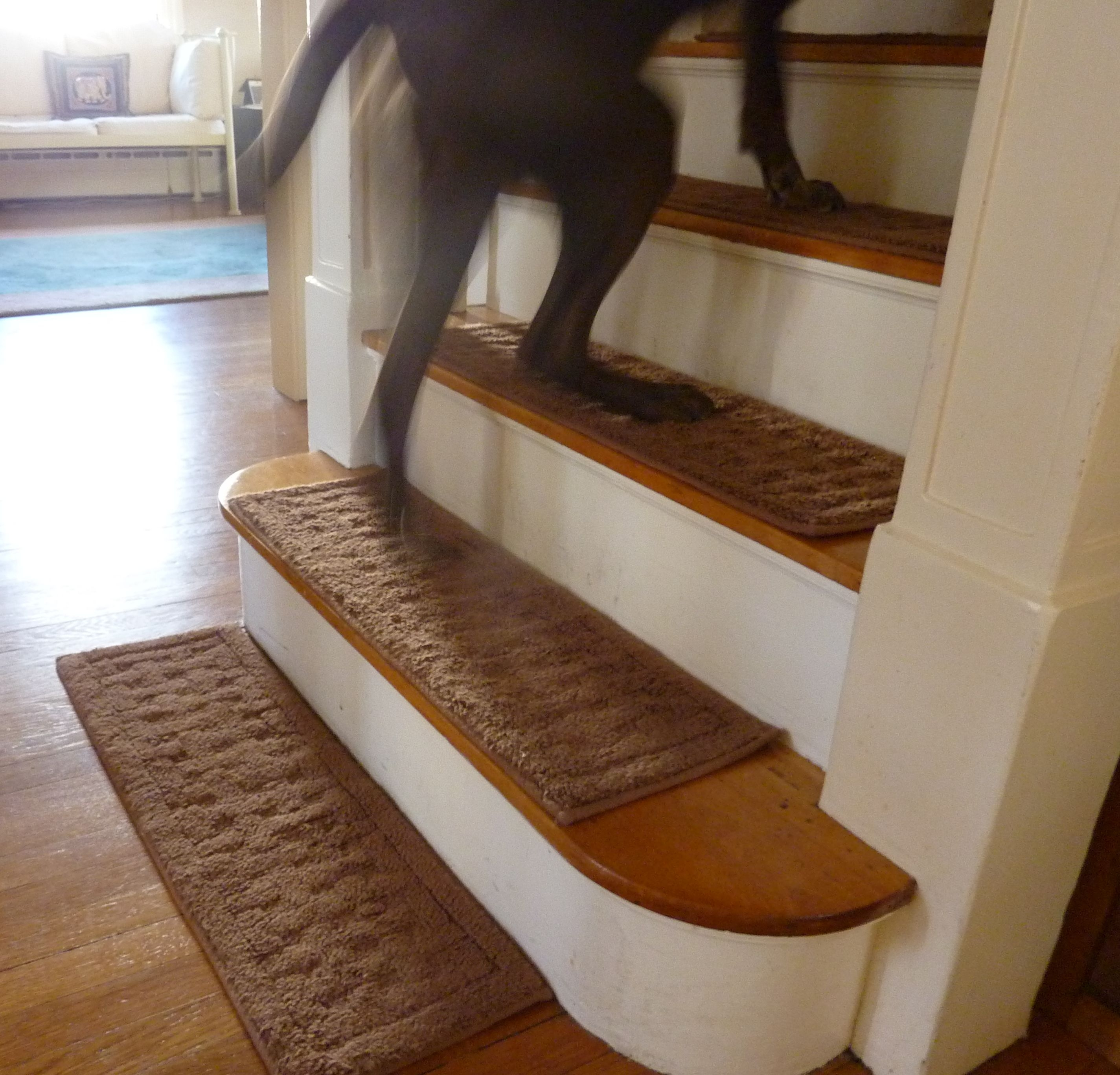 Dogs Dont Look Both Ways A Book About Life And Dogs Part 2 In Stair Slip Guards (#9 of 20)