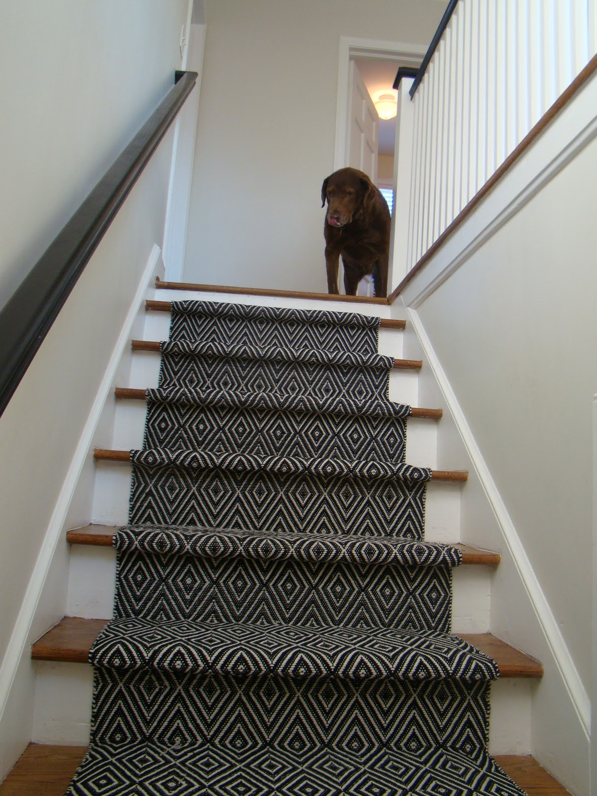 Stair Runner Black Dog Design Blog Regarding Hallway Runners For Dogs 19 Of 20