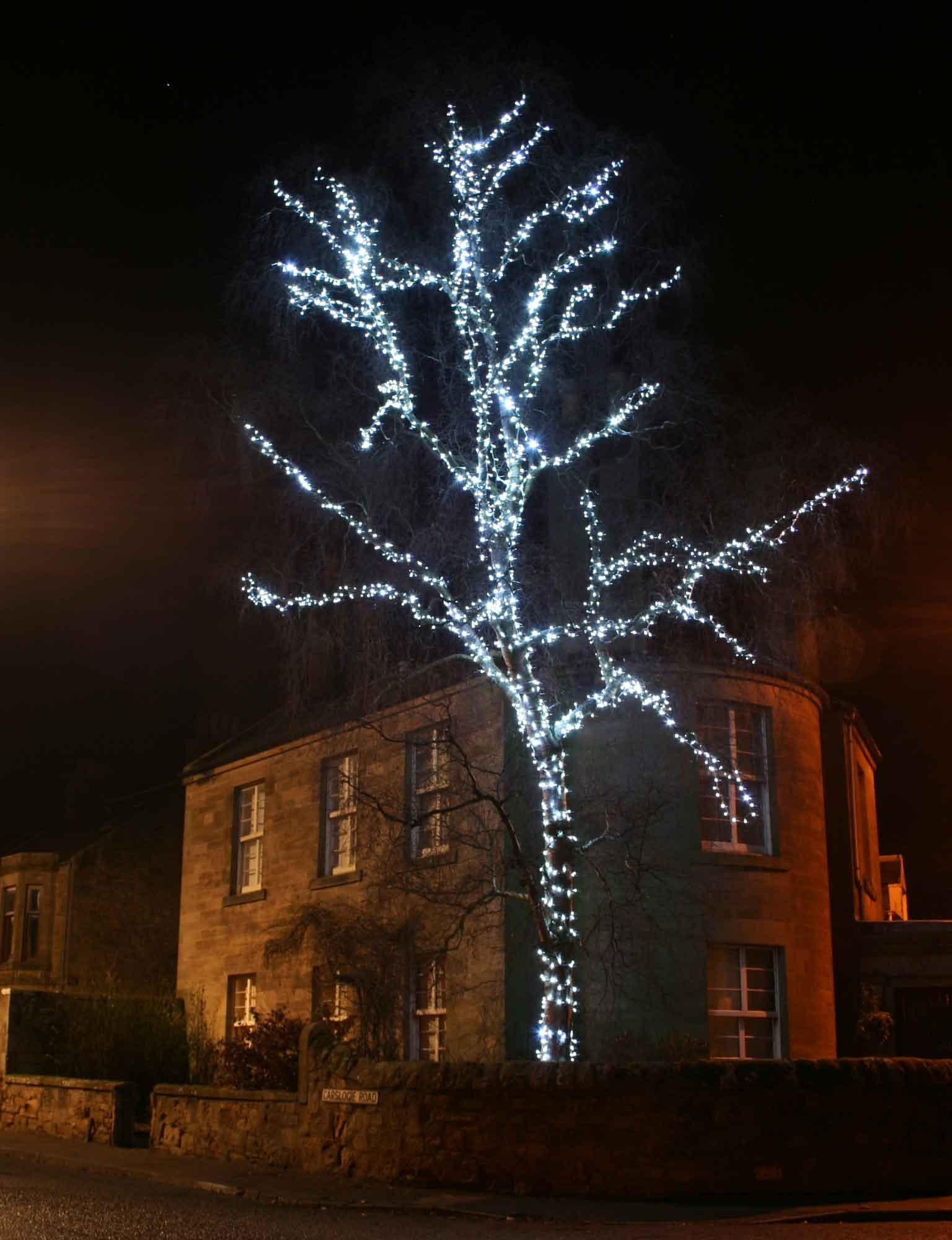 15 Best Ideas Of Hanging Lights In Outdoor Trees