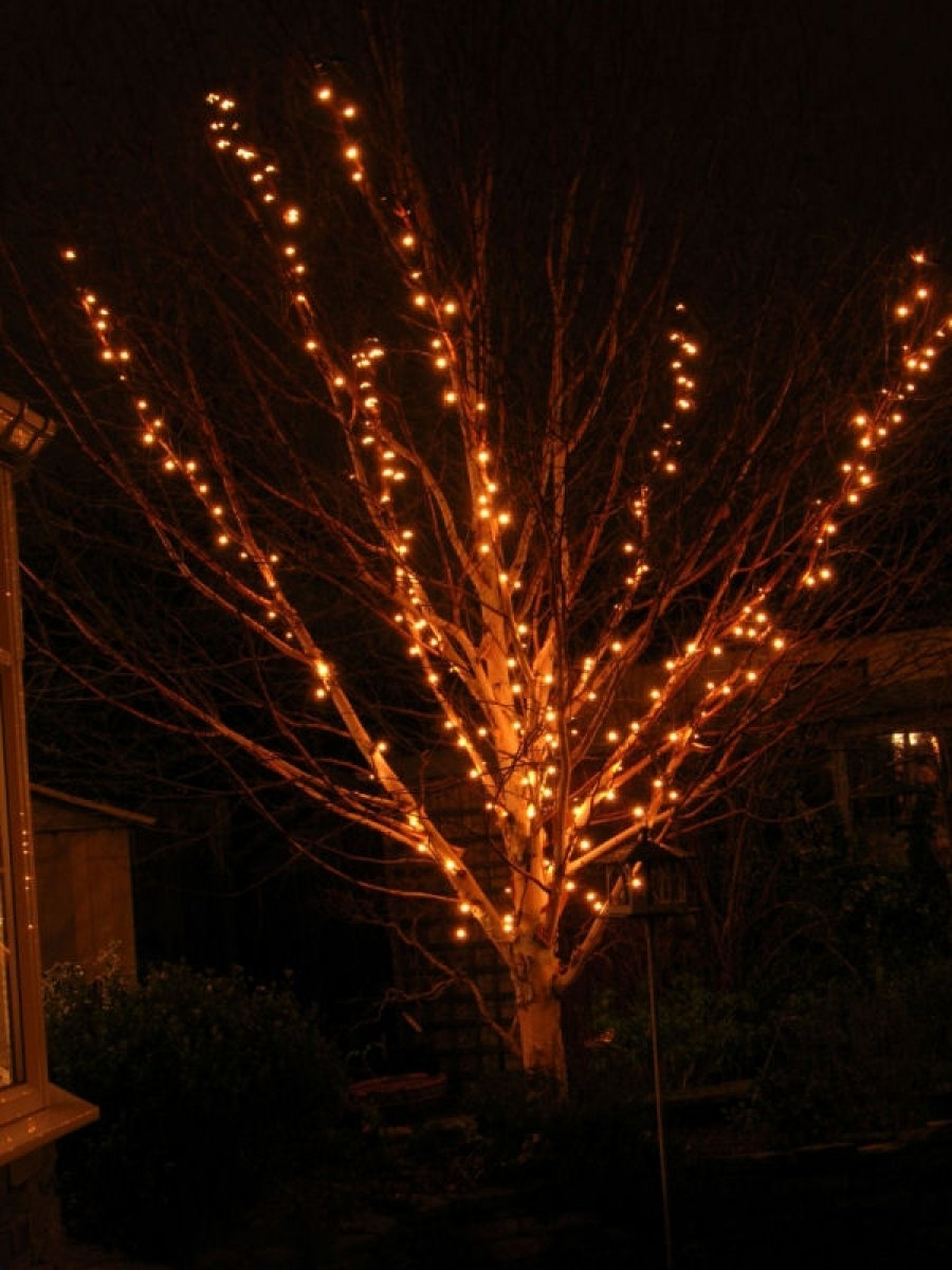 Inspiration about Decoration Ideas Gorgeous Branches Christmas Tree And Small Lights Regarding Hanging Lights In Outdoor Trees (#11 of 15)