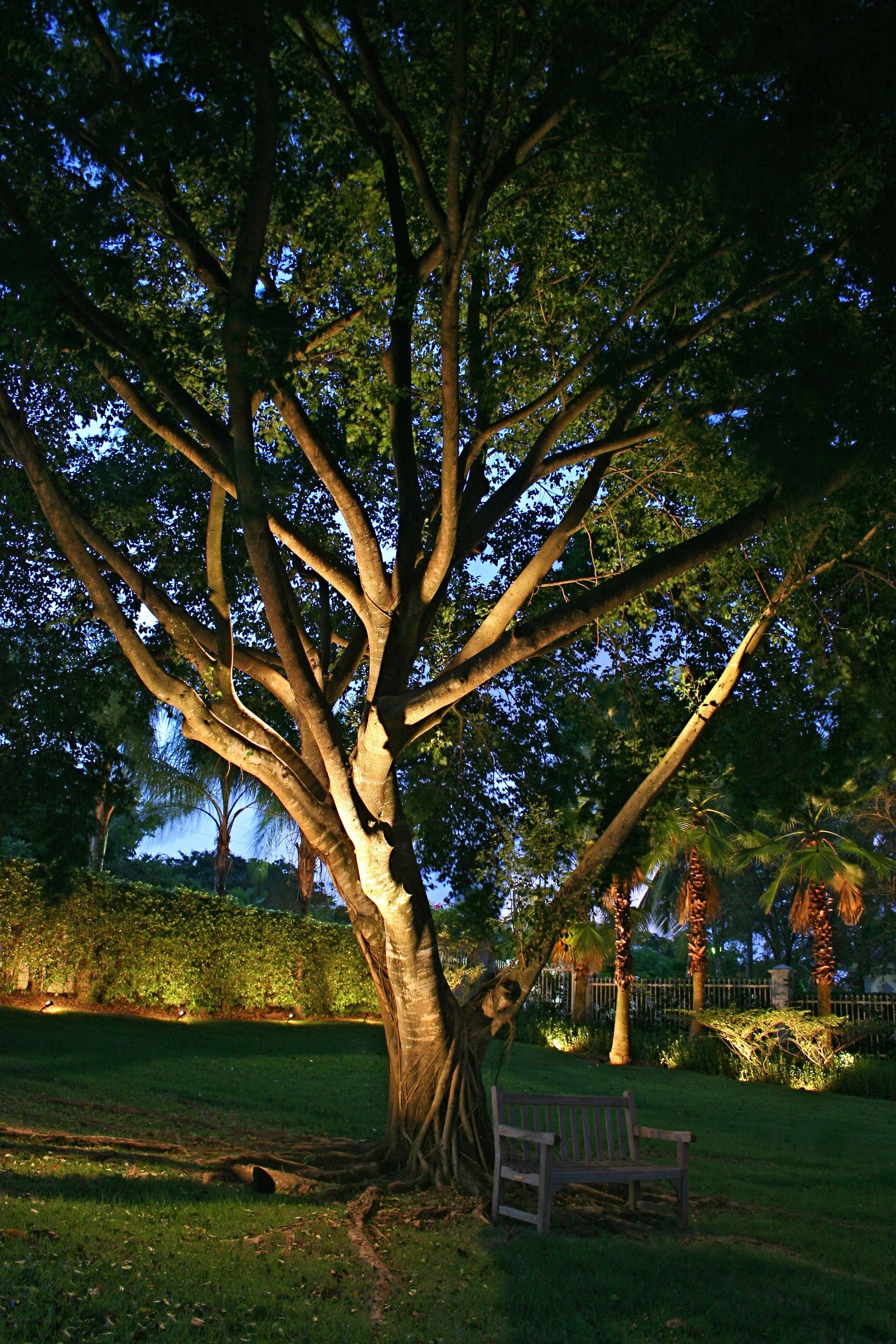 Delectable Outdoor Tree Lights Ideas | Creative Design | Pinterest In Outdoor Low Voltage Hanging Tree Lights (View 14 of 15)