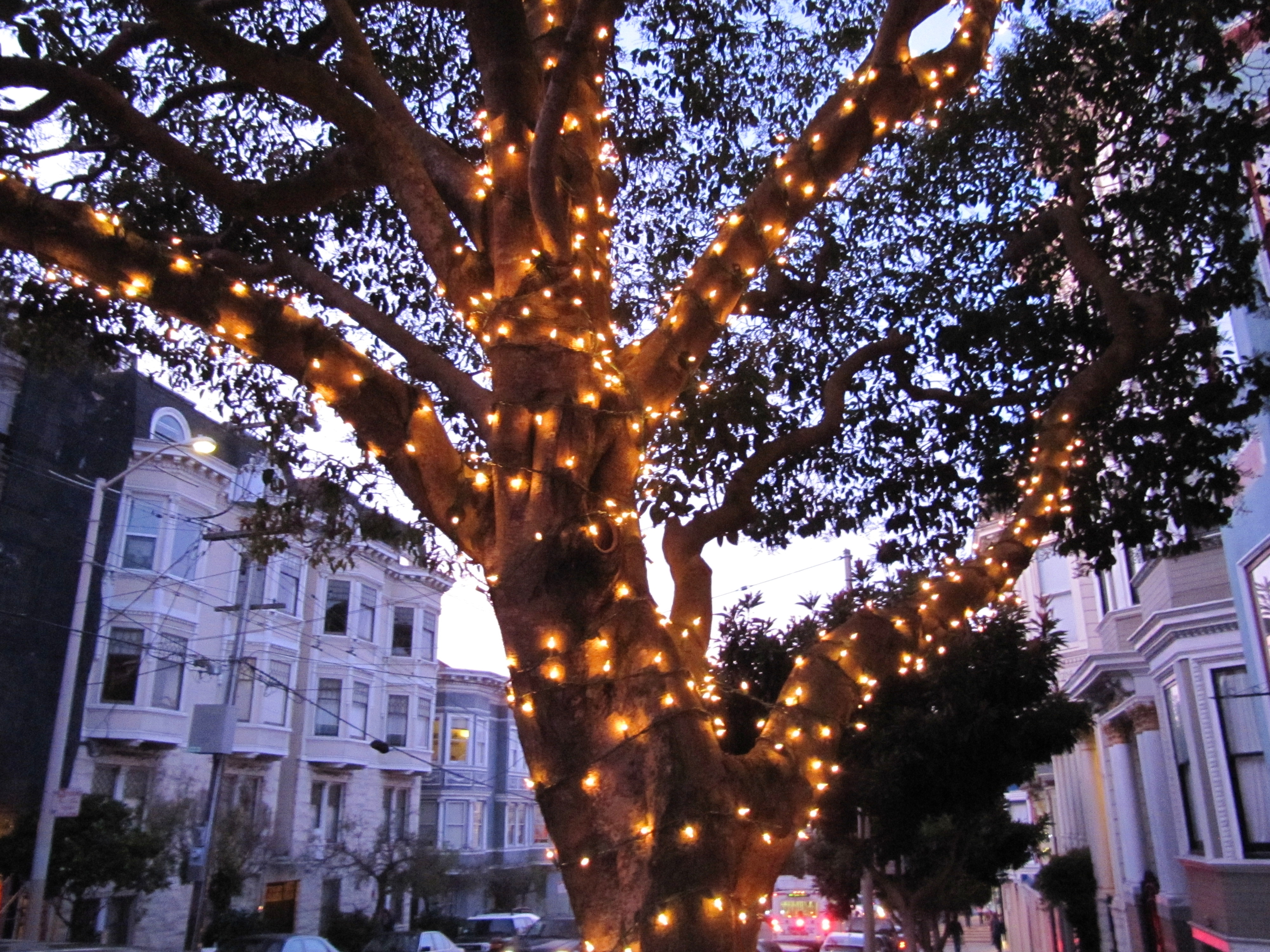 Inspiration about Diy : String Lights Outdoor Tree Home Landscapings Decorate Your Within Hanging Lights In Outdoor Trees (#6 of 15)