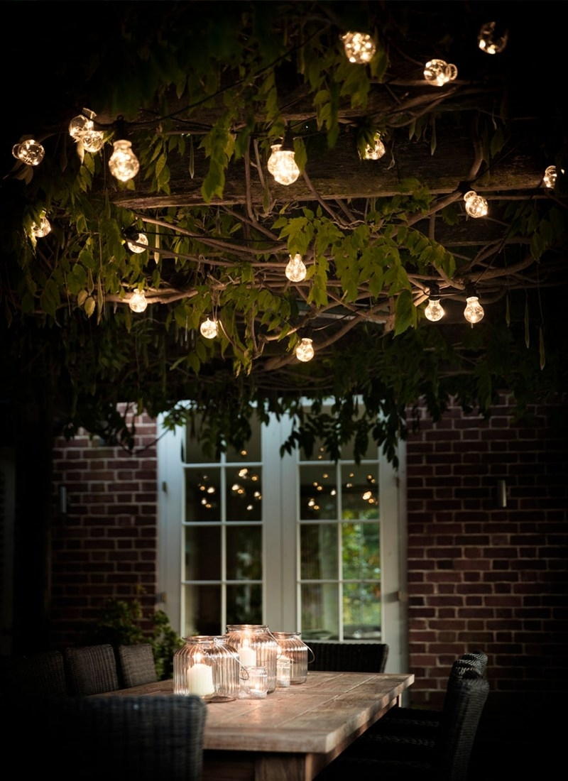 Festoon Lights, Classic – 20 Bulbs | Garden Trading With Hanging Lights On An Outdoor Tree (#11 of 15)