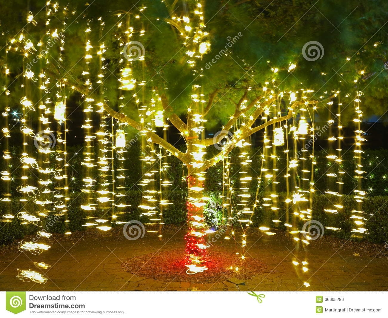Holiday Lights In Tree / Summer Night Stock Photo – Image Of Festive Pertaining To Outdoor Hanging Lights For Trees (View 11 of 15)