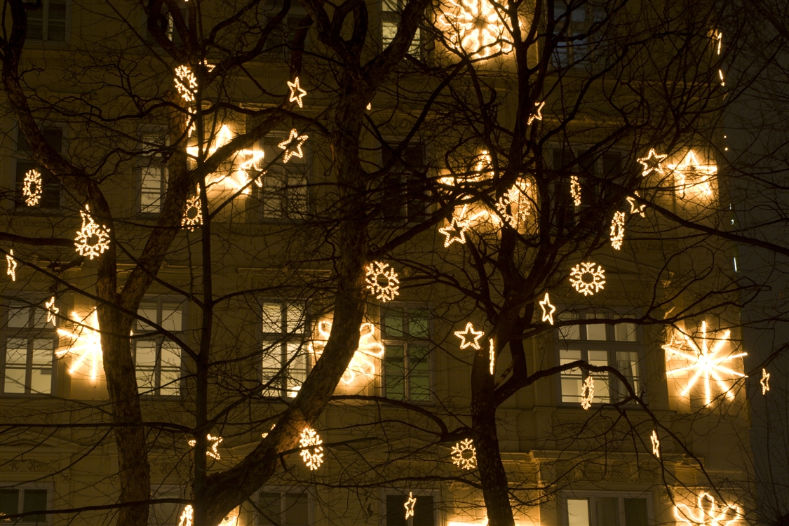 Popular Photo of Hanging Lights On An Outdoor Tree