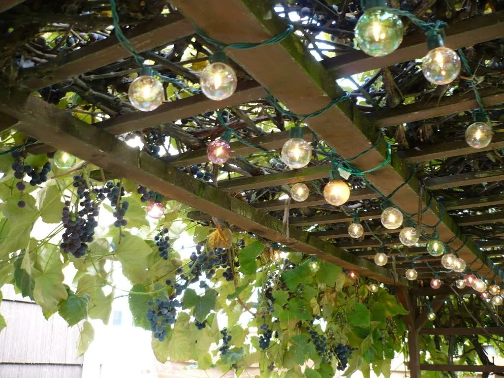 My Uncle Had A Grape Vine Trellis In His Yard (View 6 of 15)