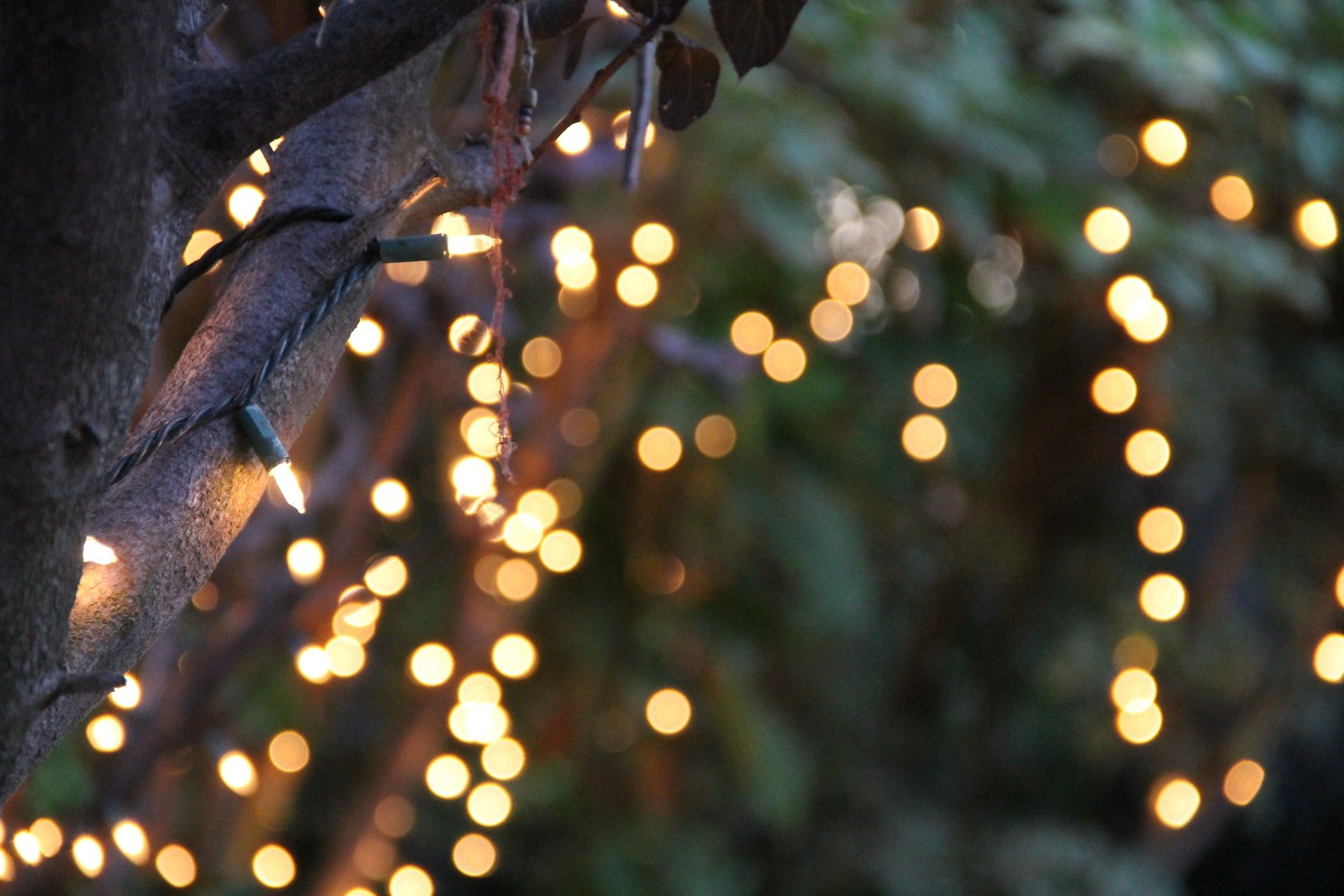Outdoor Hanging Lights – Google Search | Pococello Mood Board In Outdoor Hanging Grape Lights (View 12 of 15)