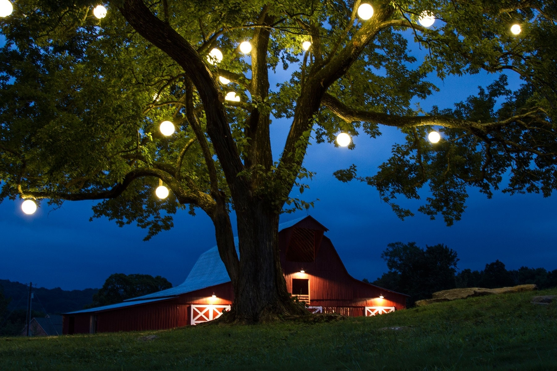 Outdoor Tree Lights Home Design Ideas And Pictures – Hommum For Outdoor Hanging Tree Lights (View 8 of 15)