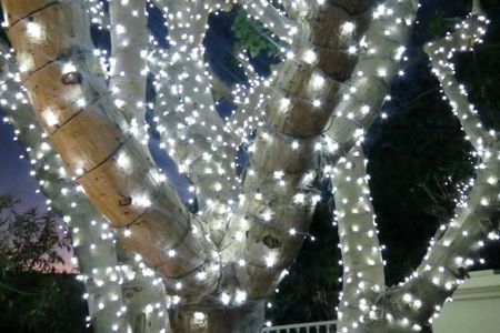How To Wrap Trees With Outdoor Lights Intended For Outdoor Lanterns For Trees (View 8 of 15)