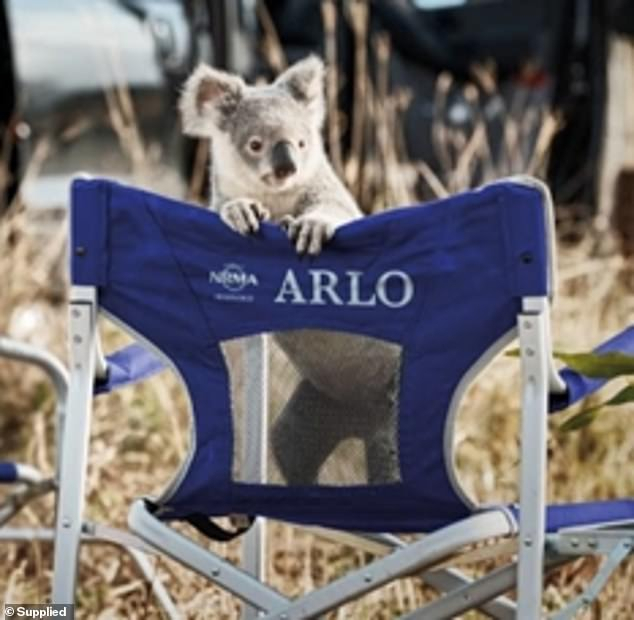 Heartbreaking New Nrma Tv Ad Highlights The Bleak Future Of For The Gray Barn Kind Koala Curtain Panel Pairs (View 8 of 50)
