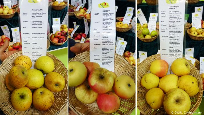 Can Germany′s Heirloom Apple Varieties Be Saved Inside Apple Orchard Printed Kitchen Tier Sets (View 14 of 50)