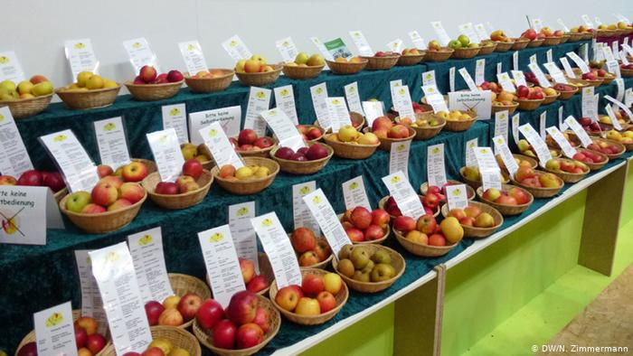Can Germany′s Heirloom Apple Varieties Be Saved Pertaining To Apple Orchard Printed Kitchen Tier Sets (View 15 of 50)