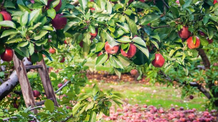 Planning And Planting The Perfect Backyard Orchard | Stuff.co (View 39 of 50)