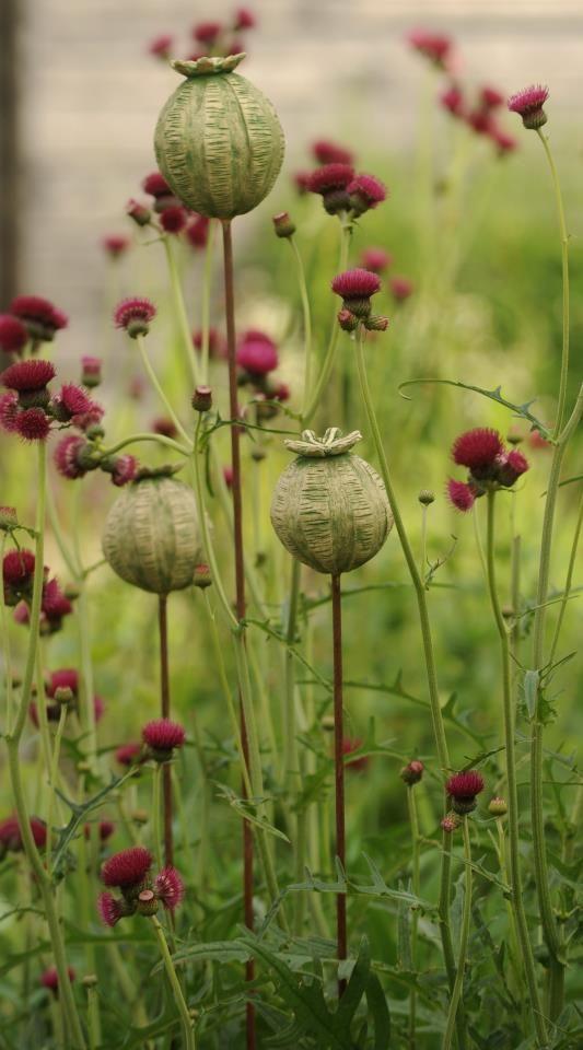 Pin Di Brenda Morris Su Projets À Essayer   Arte Per With Wilde Poppies Ceramic Garden Stools (View 11 of 20)