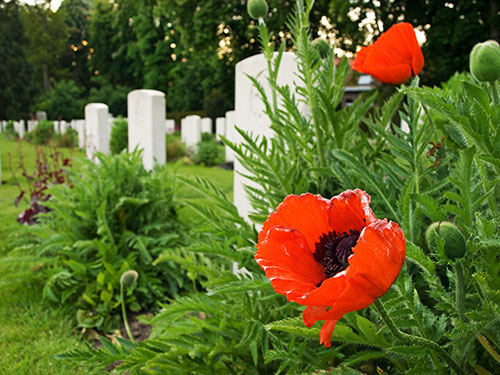 Poppies To Remember   Mitre 10™ Throughout Wilde Poppies Ceramic Garden Stools (View 16 of 20)