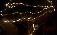 Hanging Outdoor Christmas Lights in Trees